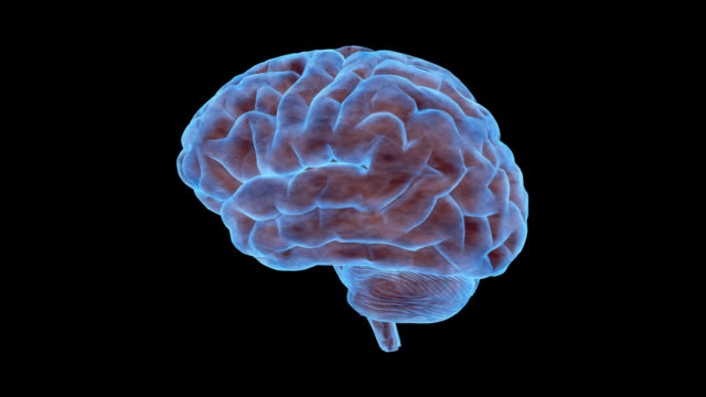 a human brain rotates - cerebrum video stock e b–roll