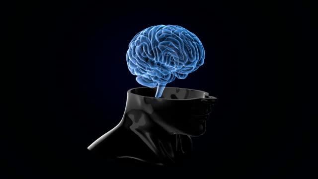 vídeos de stock, filmes e b-roll de varredura do cérebro humano loopable - telencéfalo