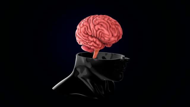 vídeos de stock, filmes e b-roll de varredura do cérebro humano - telencéfalo