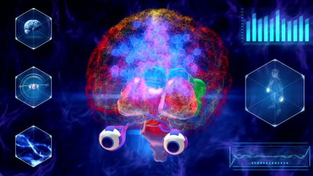vídeos de stock, filmes e b-roll de escaneio cerebral humano - lobo temporal