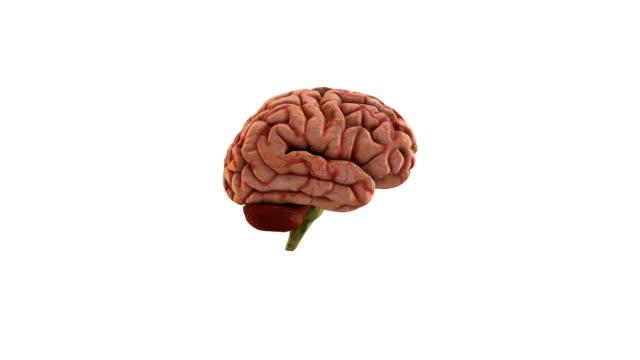 human brain - human brain stock videos & royalty-free footage