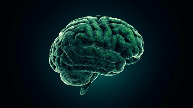 stockvideo's en b-roll-footage met menselijk brein - hersenhelft