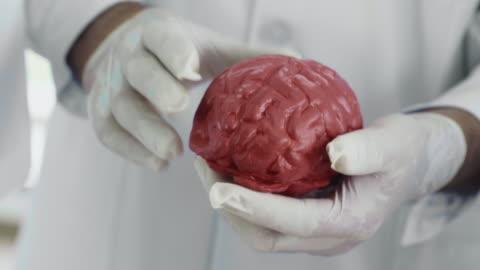 human brain - human internal organ stock videos & royalty-free footage