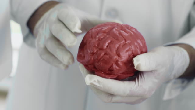 human brain - human internal organ stock videos & royalty-free footage