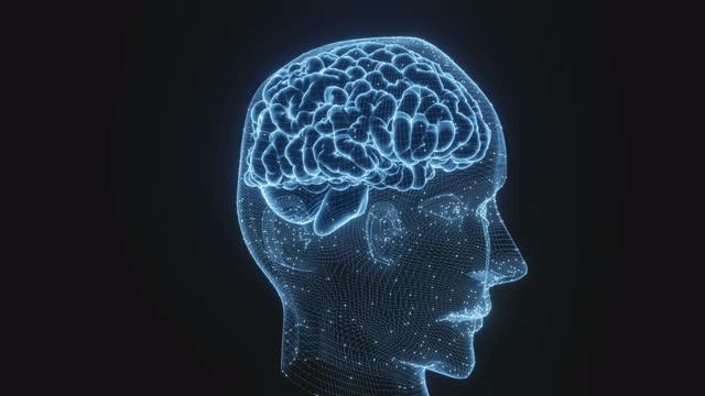 menschliches gehirn - cerebellum stock-videos und b-roll-filmmaterial
