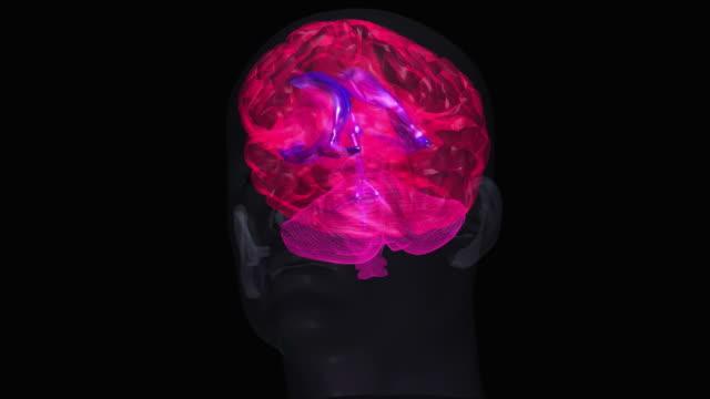 human brain - biomedical illustration stock videos & royalty-free footage