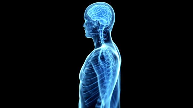 human brain - menschliche darstellung stock-videos und b-roll-filmmaterial