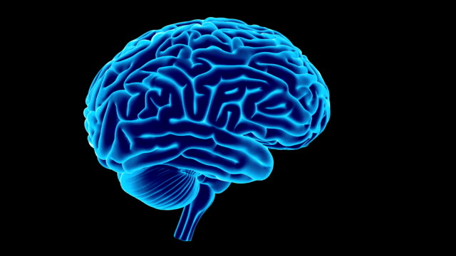 human brain - biomedical illustration stock videos & royalty-free footage