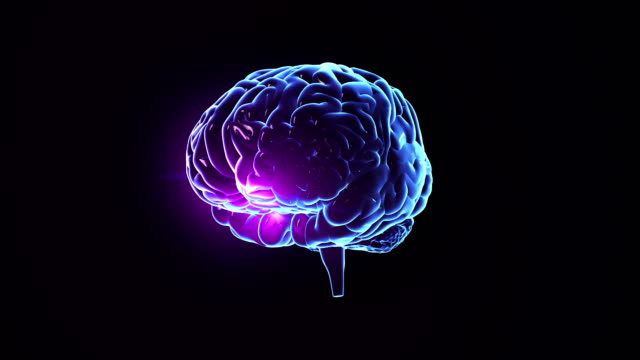 human brain with neuronal impulses. spinning. loopable. blue. - human nervous system stock videos & royalty-free footage