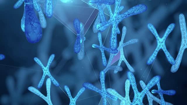 human chromosome. - chromosome stock videos & royalty-free footage