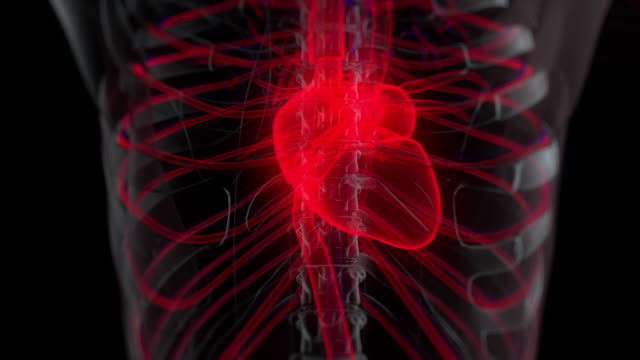 human circulatory system anatomy - atrium heart stock videos & royalty-free footage