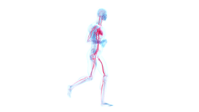 human circulatory system - cardiovascular system stock videos & royalty-free footage
