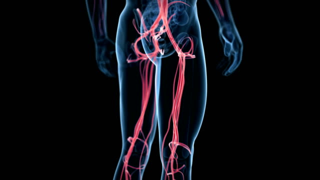 human circulatory system - artery stock videos and b-roll footage