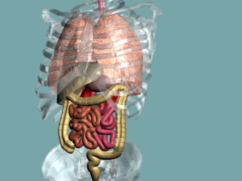 human digestive system - human small intestine stock videos & royalty-free footage