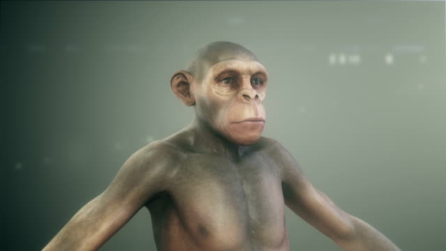 human evolution - primate stock videos & royalty-free footage