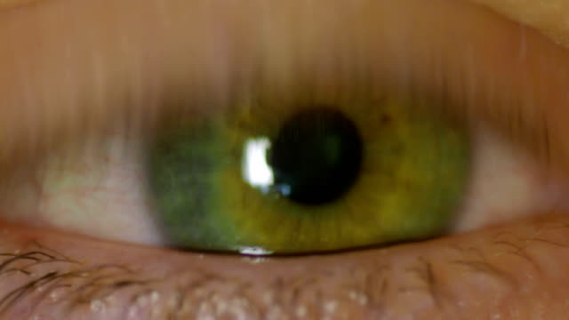 Human Eye Pupil Constriction in Response to Light