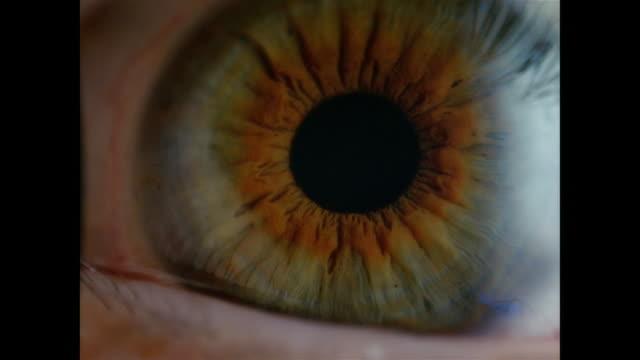 vídeos de stock, filmes e b-roll de slo mo, ecu, human eye  - íris olho