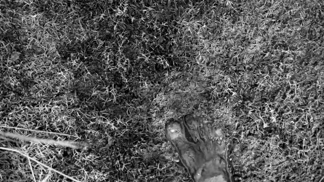 vídeos y material grabado en eventos de stock de pies humanos caminar en suelo mojado - planta del pie
