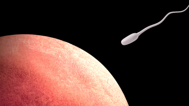 human fertilisation - sperm stock videos & royalty-free footage