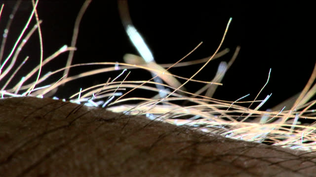 vidéos et rushes de human hair standing on end - macrophotographie