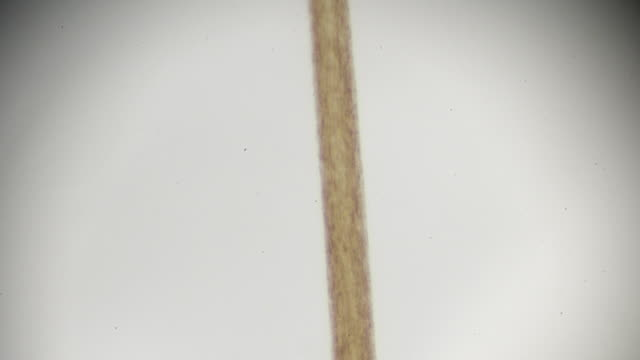 human hair under microscopy - human hair stock videos & royalty-free footage