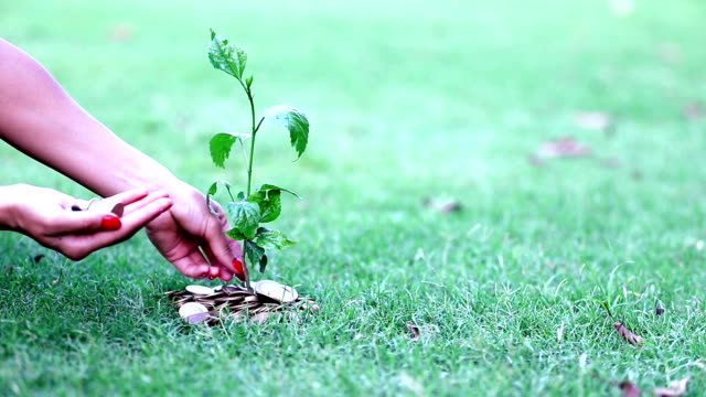 HD: Human hand and planting coin tree concept