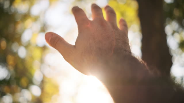 human hand and sun light - coniferous stock videos & royalty-free footage