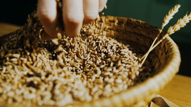 stockvideo's en b-roll-footage met slo mo menselijke hand cupping tarwe granen - volkoren