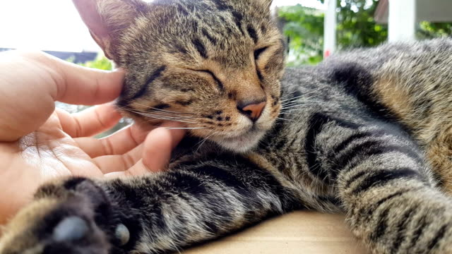 Menschliche Hand Petting schläfrige Katze