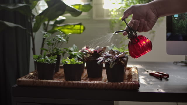 a human hand shot of a young woman is watering the plant at home indoor garden - planting stock videos & royalty-free footage