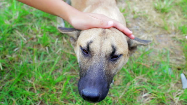 Human Hand stroking the dog