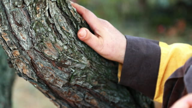 a human hand touching a pine tree bark - plant bark stock videos & royalty-free footage