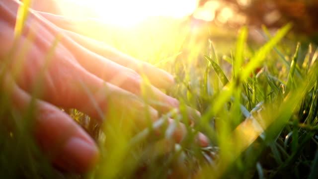 vídeos de stock, filmes e b-roll de mão humana tocando a grama - fragilidade