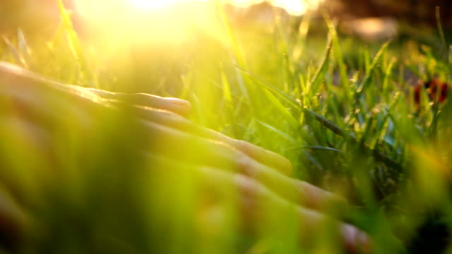 human hand touching grass - morbidezza video stock e b–roll