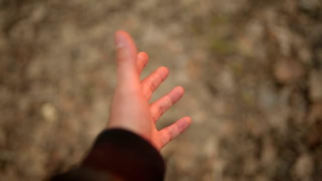 Human hand touching plant