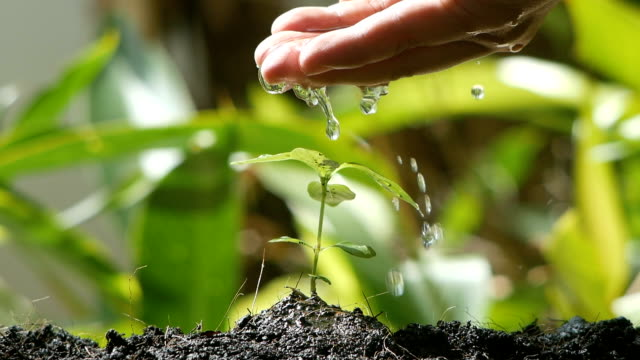 Human hand watering plant seedling slow motion shot