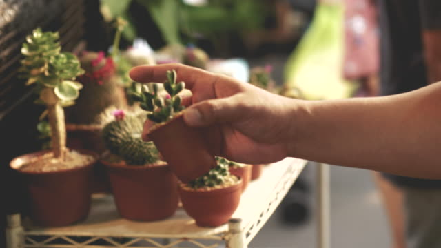 vídeos de stock e filmes b-roll de human hand while choosing cactus at the garden market -video stock - cato