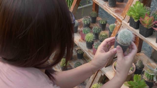mänsklig hand medan du väljer kaktus. - människoryggrad bildbanksvideor och videomaterial från bakom kulisserna