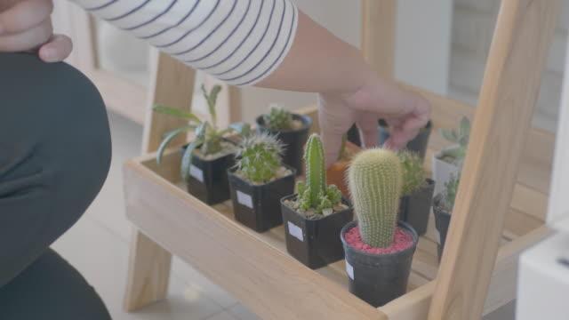 menschliche hand bei der wahl des kaktus. - nadel pflanzenbestandteile stock-videos und b-roll-filmmaterial