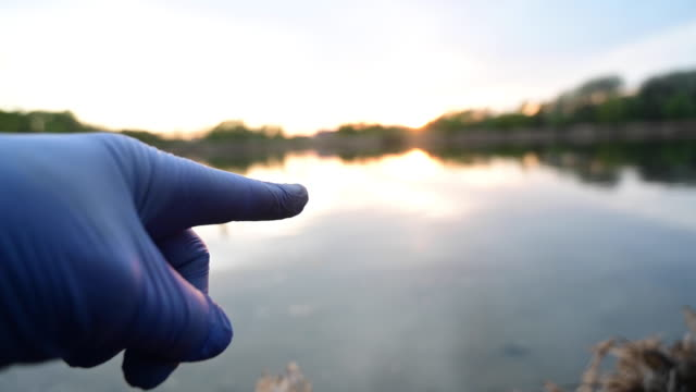 human hand with blue protective plastics gloves pointing with index finger something. there is a duck swimming on the water of a lake at sunset. berlin. germany. - human finger video stock e b–roll