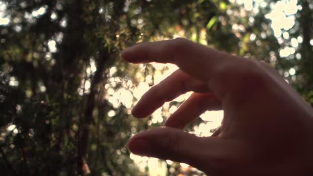 stockvideo's en b-roll-footage met menselijke hand met zonlicht - menselijke arm