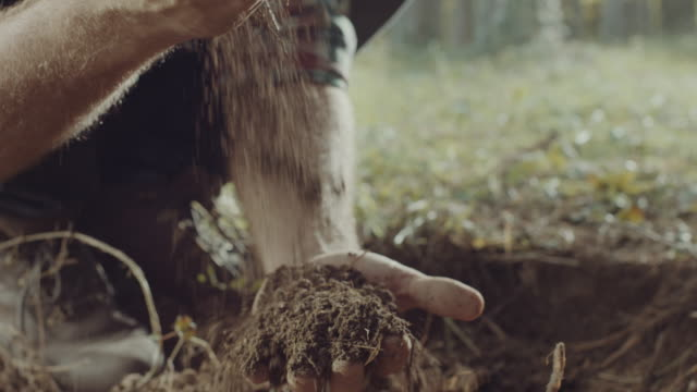 human hands holding a soil - micro organism stock videos & royalty-free footage