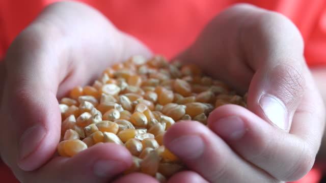 vídeos y material grabado en eventos de stock de human hands holding raw uncooked popcorn kernels - manos ahuecadas