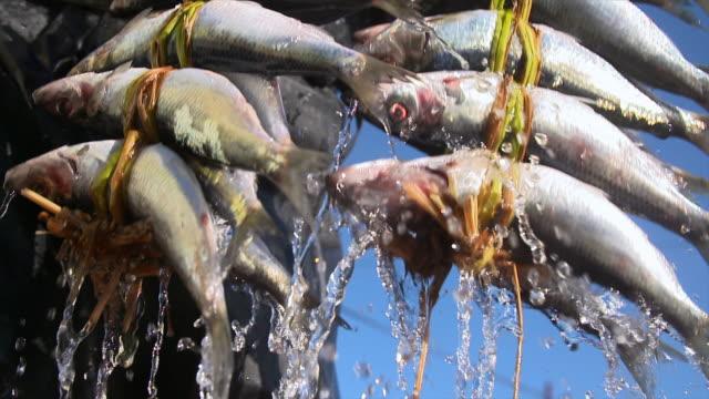 vídeos de stock e filmes b-roll de human hands pulling bundles of herring out of water - captura de peixe