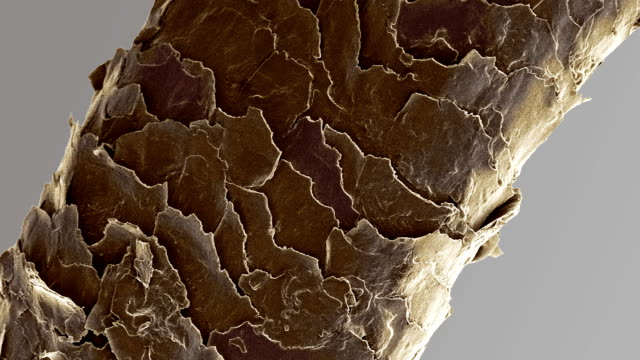 """human head hair, sem"" - magnification stock videos & royalty-free footage"