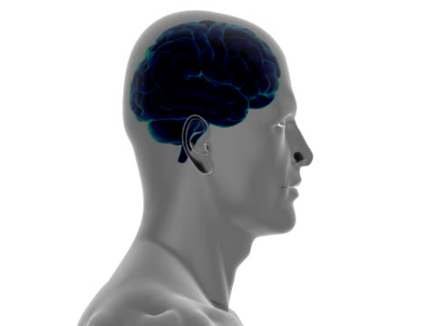 human head with brain - anatomy stock videos & royalty-free footage