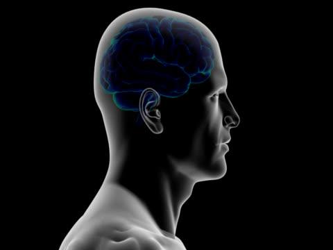 Cabeza humana con cerebro