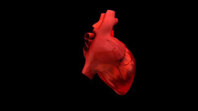 human heart animation - human heart stock videos & royalty-free footage