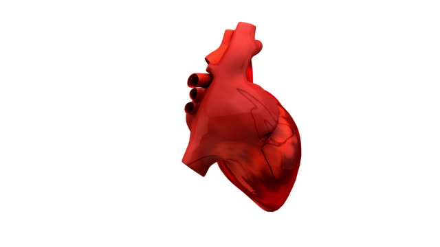 vídeos y material grabado en eventos de stock de human heart animation - biomedical illustration