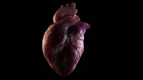 human heart beat - anatomy stock videos & royalty-free footage